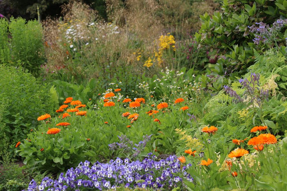 Summer Show at Russborough garden and demesne (4)